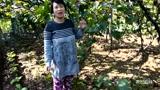 一年的葡萄树苗该怎么管理?