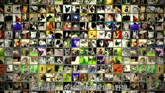 李飞飞:我们怎么教计算机理解图片?