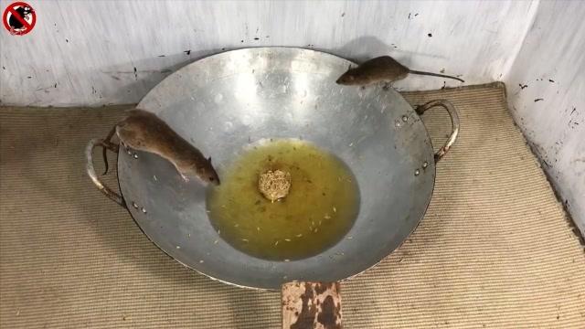 2019年7个最好的捕鼠器盘点,还是大锅里倒油最实用