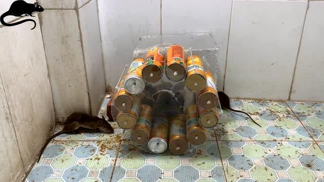用易拉罐制作捕鼠神器,老鼠彻底绝望了