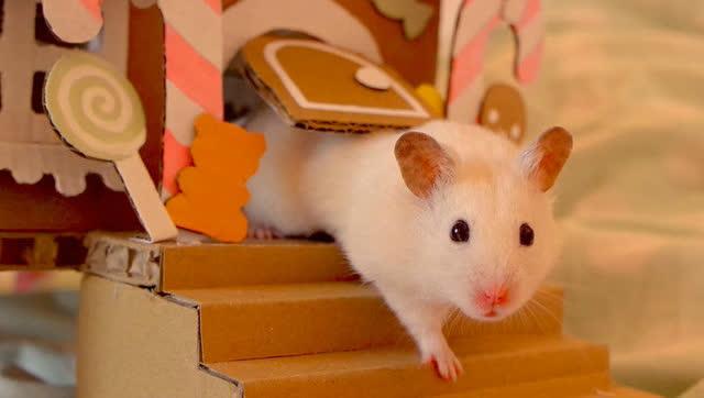 倉鼠的微縮世界之豪華別墅